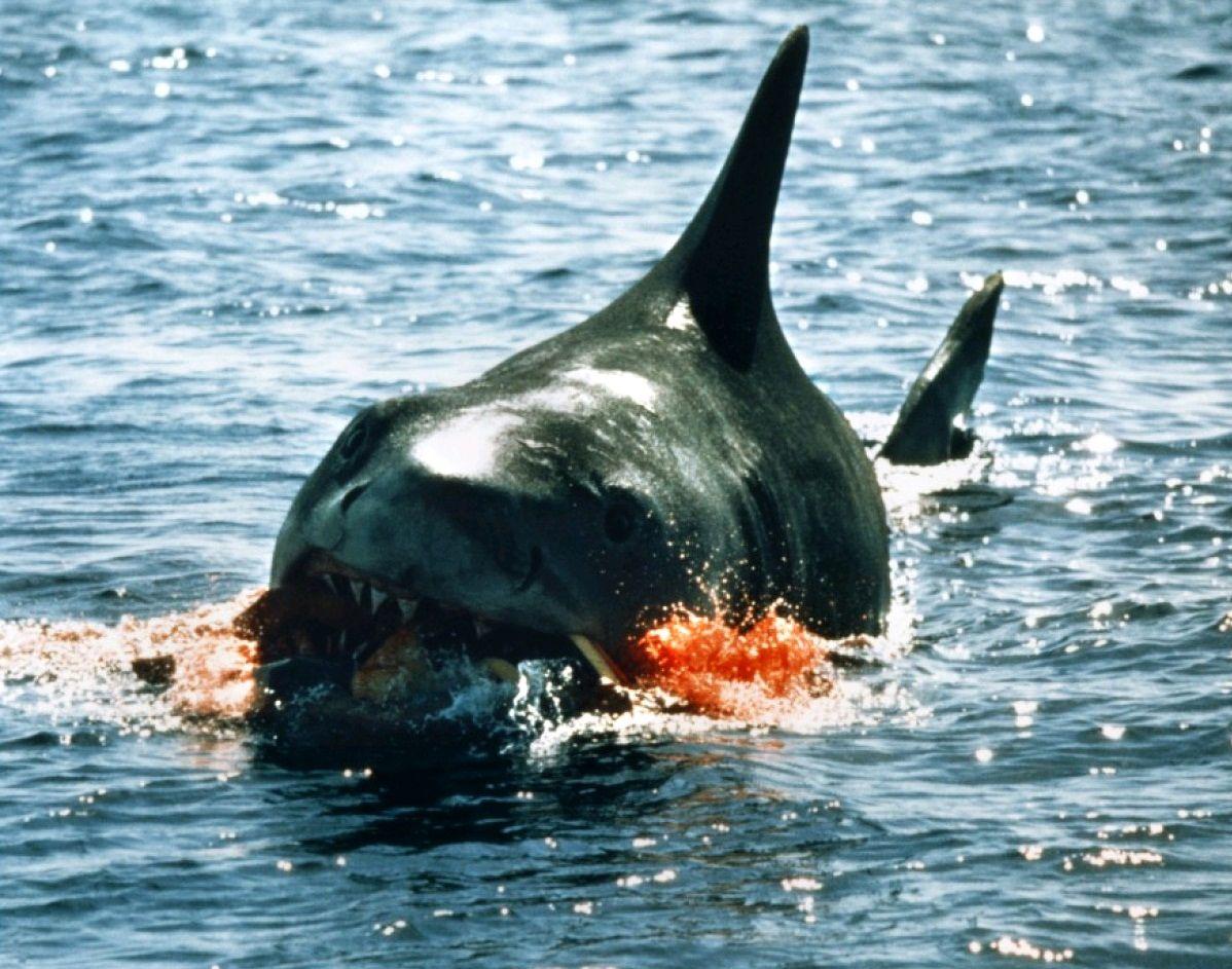 Челюсти / Jaws (1975): кадр из фильма