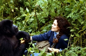 Гориллы в тумане / Gorillas in the Mist: The Story of Dian Fossey (1988): кадр из фильма