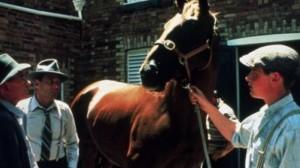 Фар Лэп: Путь к победе / Phar Lap (1983): кадр из фильма